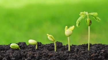 plant-seedling-000042456416_Small
